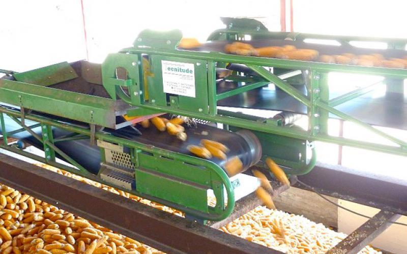 Convoyeurs à bande Tecnitude - transport de maïs