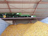 Convoyeur à bande Manubloc Tecnitude - Mise en tas de maïs